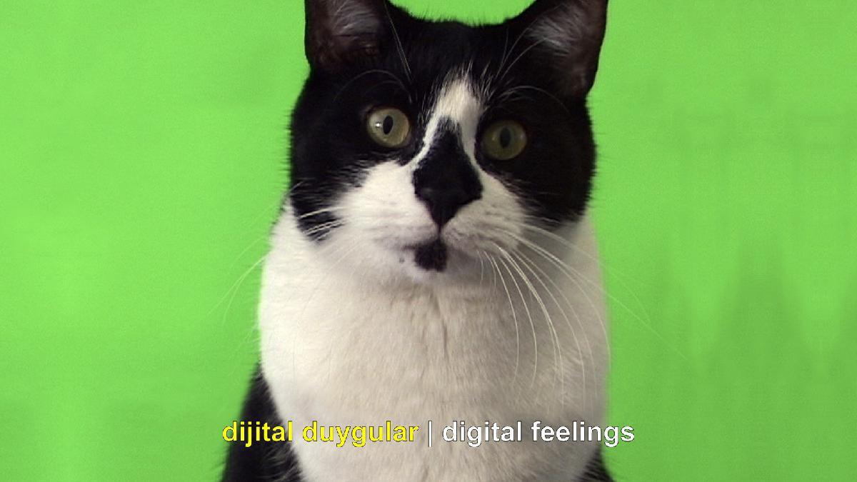 bir kedi ekrana bakıyor